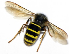 Disinfestazioni insetti
